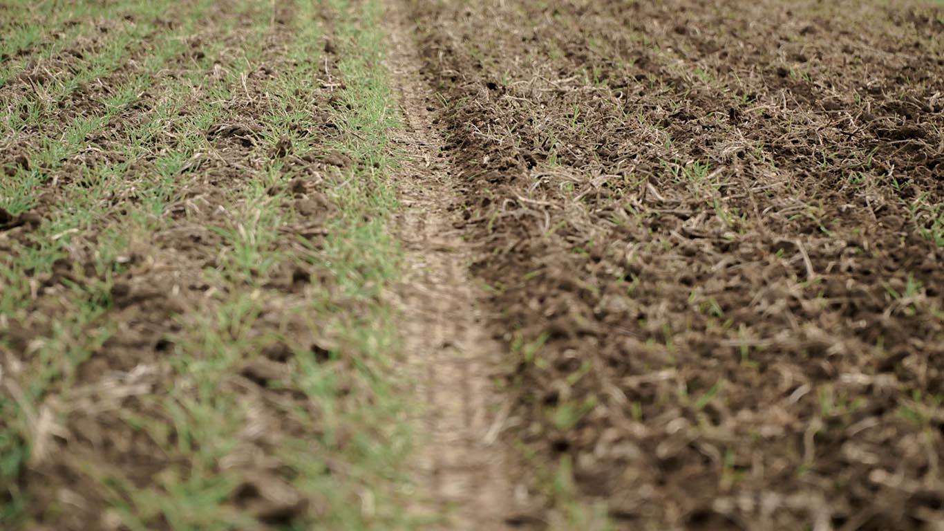 Produktbild_Striegel STW CFS Cross Farm Solution Konstantdruck Vorher Nachher