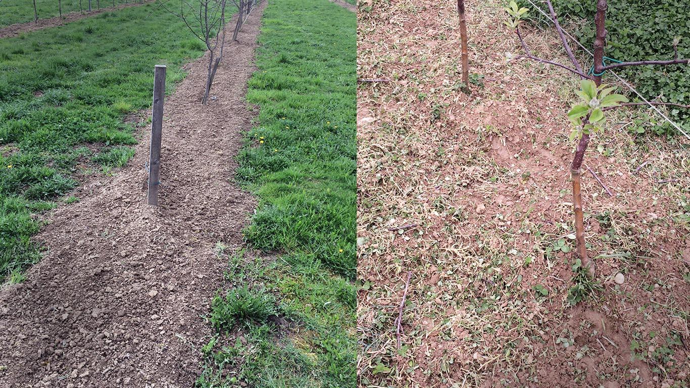 Produktbild_Unterstockfraese_CFS Cross Farm Solution_Weinbau Einsatz Vorher Nachher