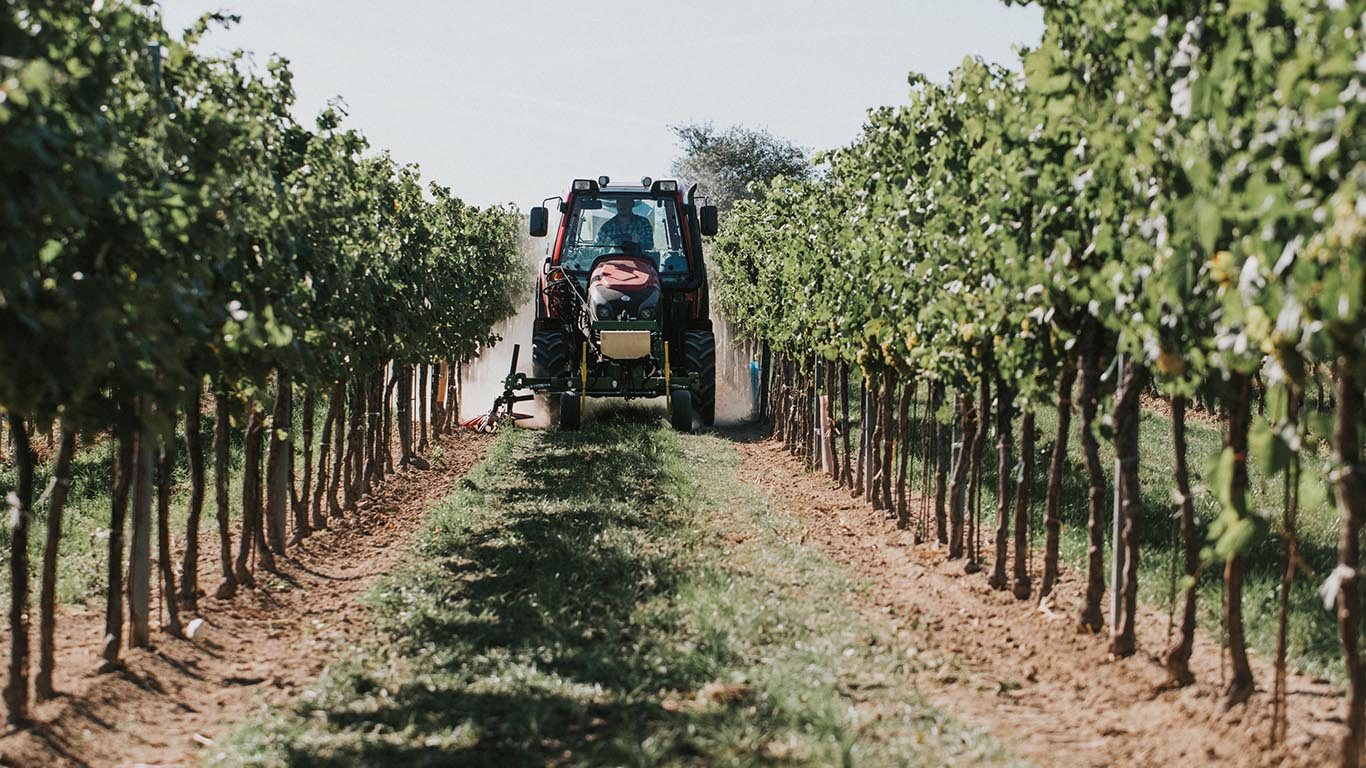 Unterstockpflege_Vinox Weinbau Einsatz_CFS Cross Farm Solution_volle Breite